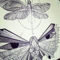Freelancer Insektum A.