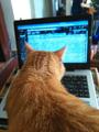 Freelancer Portal.