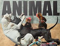 No + Maltrato Animal