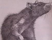 Pencil Illustrations // Ilustraciones en Lápiz