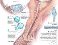 Infografía médica científica