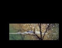 Audiovisual - Morfología 2