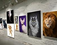Galeria de felinos
