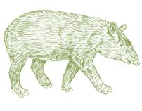Ilustración cueva de los guacharos