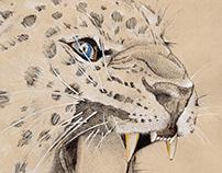Dibujo científico leopardo
