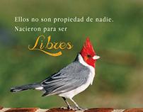 Afiches contra el tráfico de fauna nativa silvestre