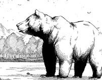 Illustration: Brown Bear