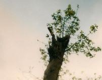 Fotografía Estenopeica - Pinhole Photography
