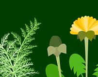 Plantas Medicinais - Receitas Botânicas