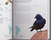 Las Aves de mi Ciudad | Guía de Observación de Aves