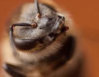 BeeSelfie