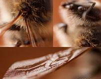 Bee Bee Bee Selfie