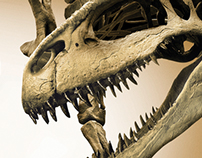 Patagonia Dinosaurs Exhibition