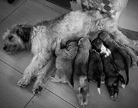 Lassie & camada