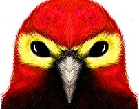 Aves Bogotanas