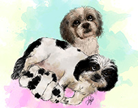 Shih Tzu - watercolor 2017*