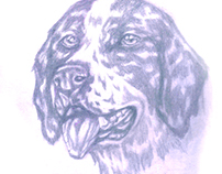 Mucuchíes, dog from Venezuela, mérida