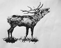 CIervo, de la serie zoo en tinta