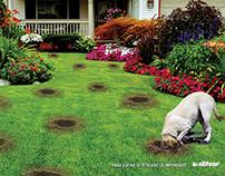 Publicidad con perros