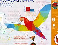 Infographic / La Guacamaya