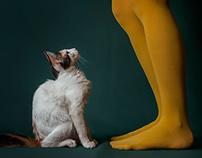 La presencia de los gatos
