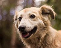 Retratos para refugio animal en Chiapas-México.
