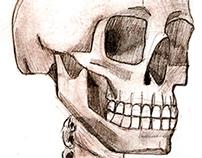 Human bones sketches