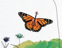 efecto mariposa-libro