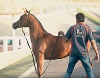 Horses Auction Promo