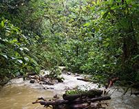 Ecuador. Zamora. Podocarpus.