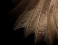 Pliegues y transformación. Experimentación fotográfica