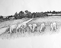 Animal and Farm illustration