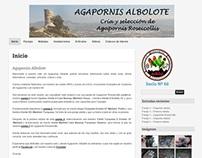 Agapornis Albolote