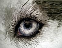 Dibujando Realismo ojo de lobo