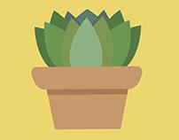 Cactus n' Succulents