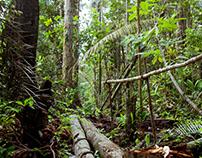 Amazonas / Landscapes