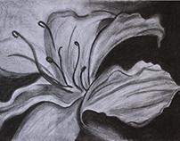 Charcoal Lily/ Lírio em Carvão - 25/04/18