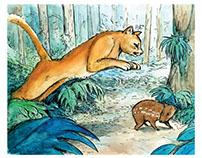 Puma vs Paca