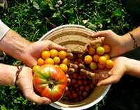 Organic agriculture - Blog writing