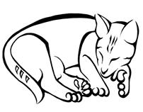 GATO | Cat