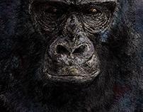 desenho - Gorilla beringei beringei - (drawing)