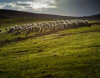 Soy la oveja numero 100