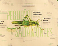 Pequeño Saltamontes - Infografía Experimental