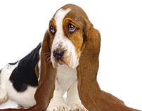 Photomanipulation - dog