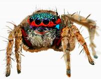 Ilustración digital - Insecto