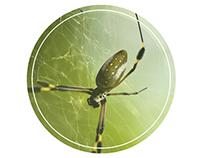 Araña Hilo de oro