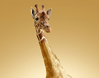 Girafa Passando Roupa?