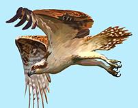 Book of Birds: The Restinga Lagoon