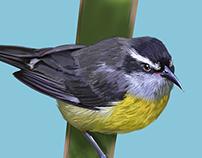 Book of Birds: The Restinga Lagoon II