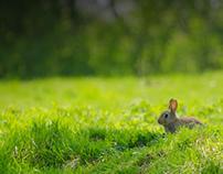 The Rabbiter - Portfolio